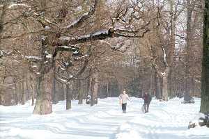 Такие дубы растут только в Эстонии - самой северной границе их ареала. Даже в нашей южной соседке Латвии у дубов прямые ветви.