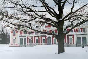 Этот дуб в июле 1929 года посадил король Швеции Густав V.