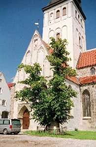 У этого старейшего в городе дерева нынче юбилей — липа растет на бывшем церковном кладбище 325 лет.