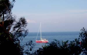 Вековые сосны и современные яхты Найссаара - чем не эстонский Капри?