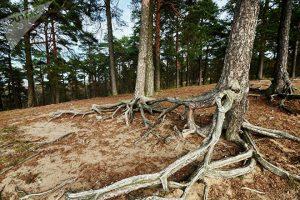 Район окружен сосновым лесом, в котором есть много тропинок для прогулок и занятий спортом